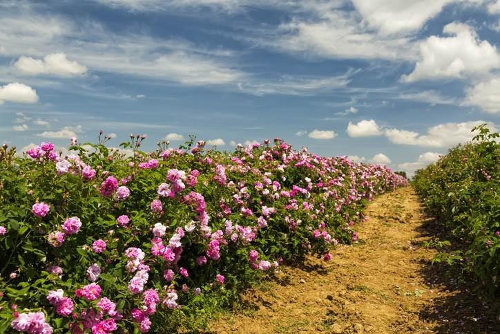 Découverte de Kazanlak (capitale de la vallée des roses)