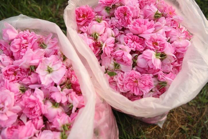 Produits cosmétiques à la Rose