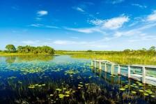Visite des Everglades