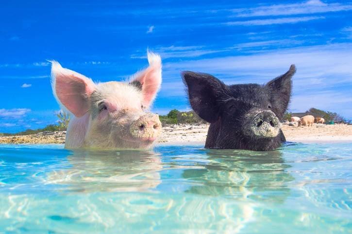 Découverte de la Plage aux cochons