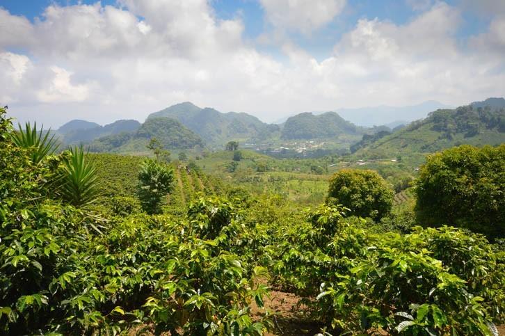 Visite de plantation de café
