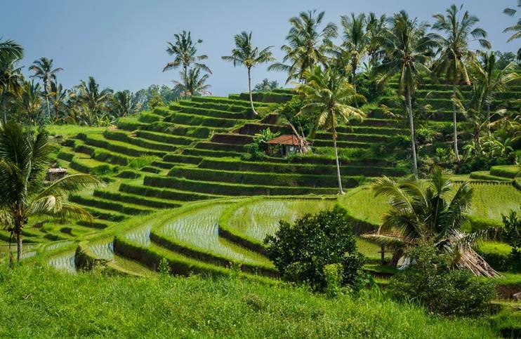 Découverte de rizières