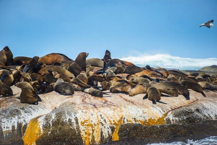 Découverte de l'île aux phoques