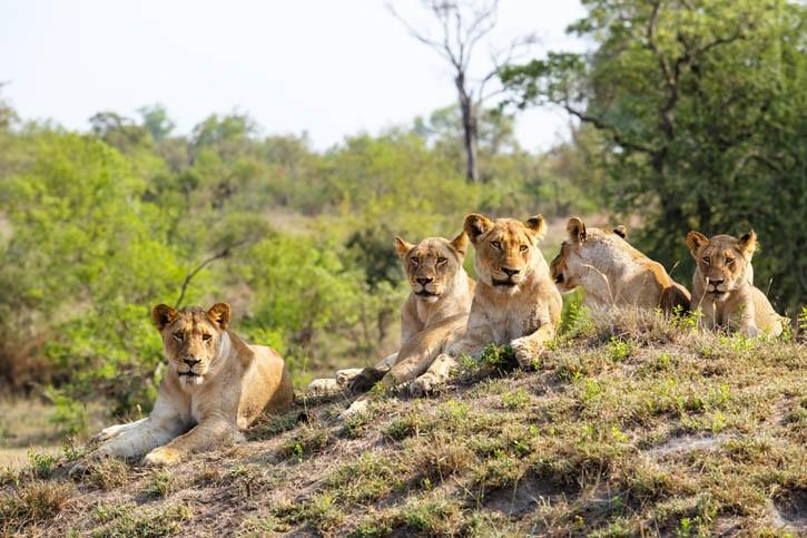 Réserve de Hluhuwe-Umfolozi