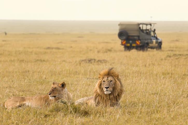 Safari dans le Parc d'Amboseli