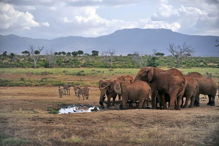 Safari dans le Parc de Tsavo