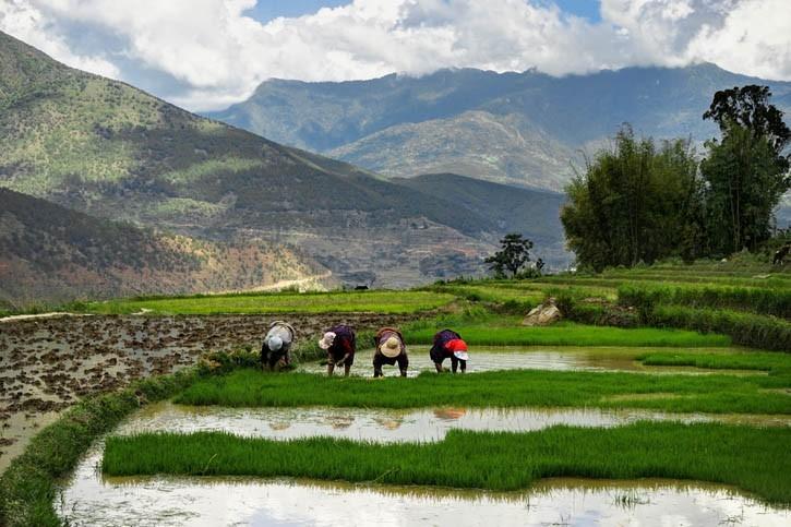 Visite rizière et rencontre avec famille bhoutanaise