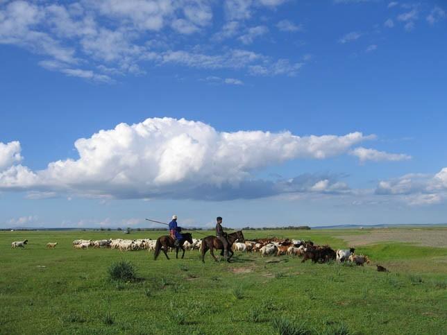 Rencontre avec des familles d'éleveurs de chevaux mongoles